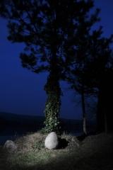 dino-vajce-5
