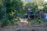 komunitna-zahrada1