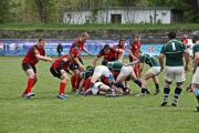 Rugby (7)