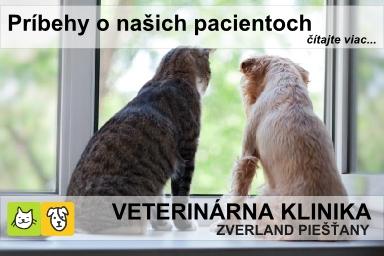 PN-KY_banner_vikend