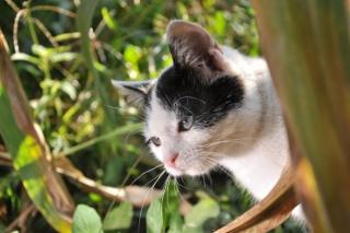 Populácia mačiek sa tak môže v rekordnom čase prem macka -1-nggid0524831-ngg0dyn-320x240x100-00f0w010c010r110f110r010t010 21279e6f0a6