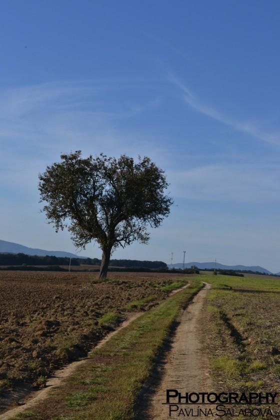 Stromček lásky (2)