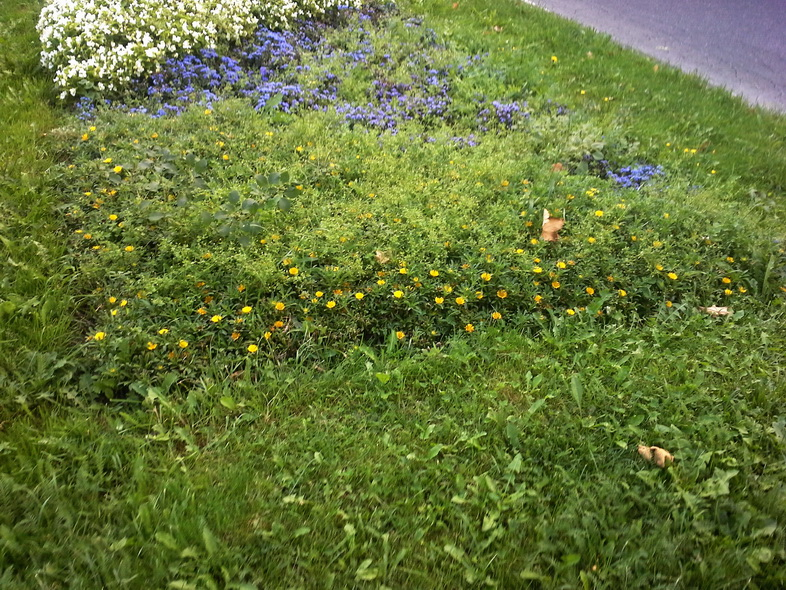 reprezentačný kvetinový záhon vo farbách vlajky Piešťan_resize