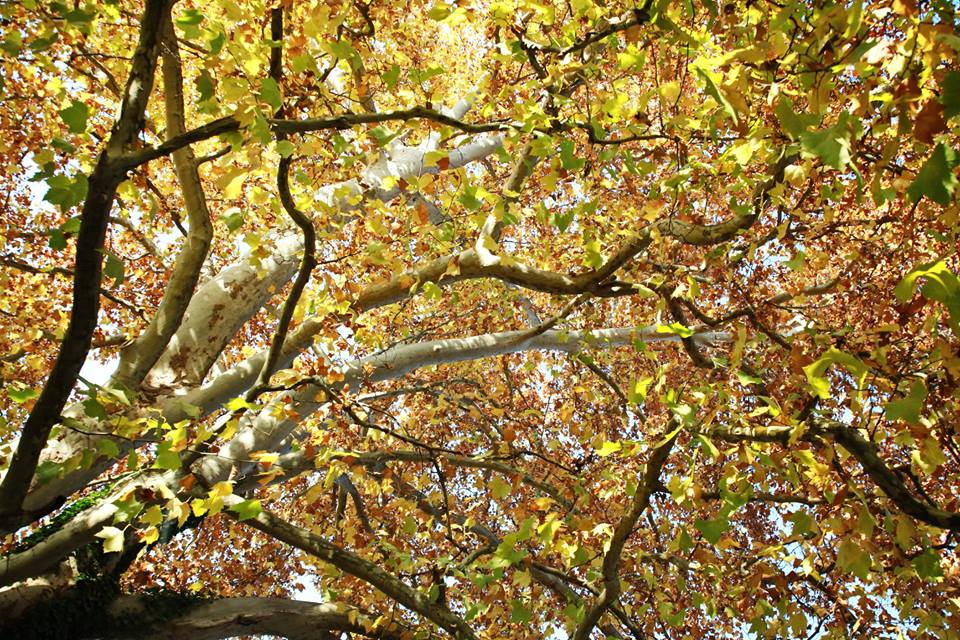 Jesen (4)