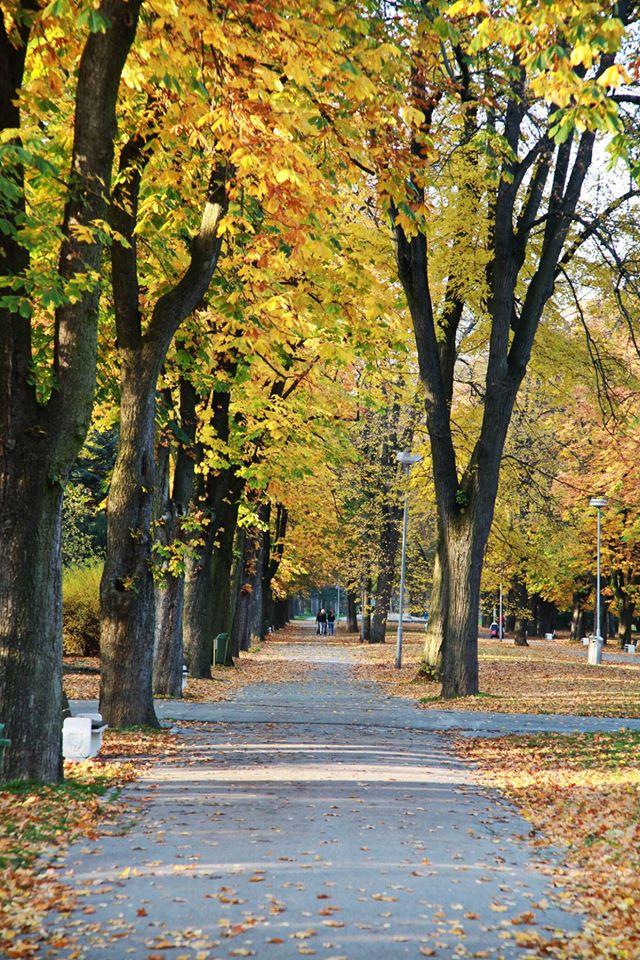 Jesen (6)