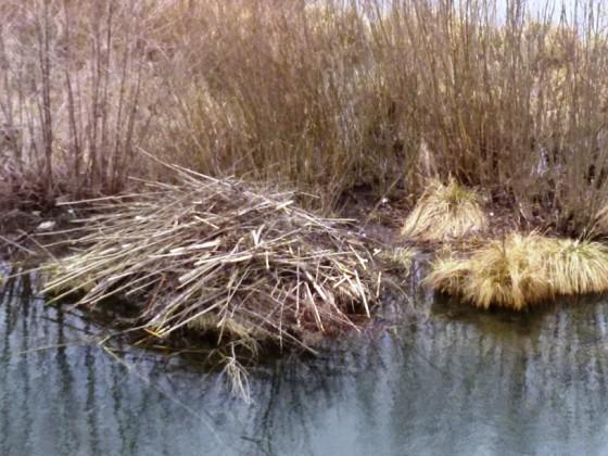 bobrie obydlie na mrtvom ramene