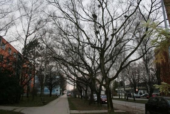 stromy hniezda