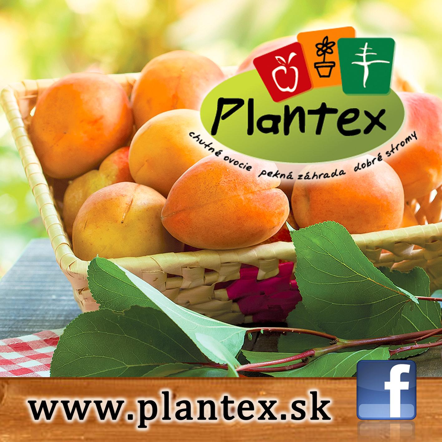 Plantex marhule