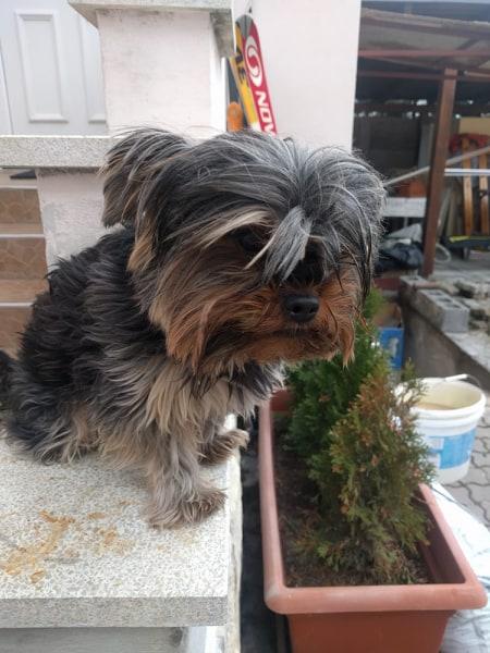 Nájdený psík