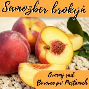 Plantex Broskyne