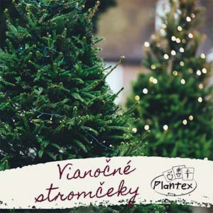 Plantex Vianoce 2019 3