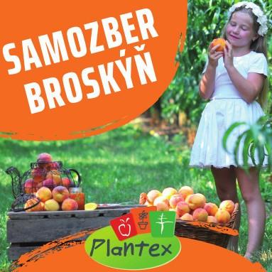 Plantex01